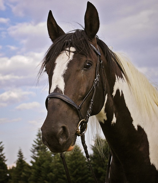 equestrian lessons and packages